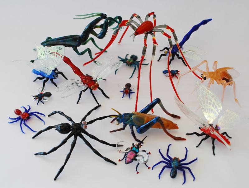 Glass Insects